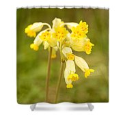 Cowslip   Primula Veris Shower Curtain
