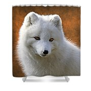 Coy Arctic Fox Shower Curtain