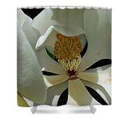 Coy Magnolia Shower Curtain