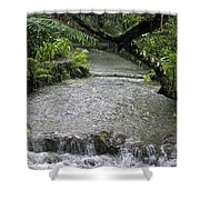 Coyaba River Gardens 6 Shower Curtain
