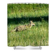 Coyote In Boulder Higlands Shower Curtain