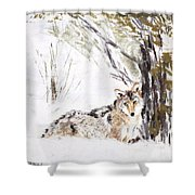 Coyote In The Snow Shower Curtain