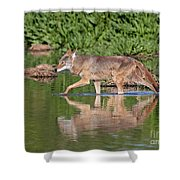 Coyote Looking For Breakfast Shower Curtain