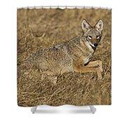 Coyote Running Shower Curtain