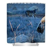 Coyote Wild Shower Curtain