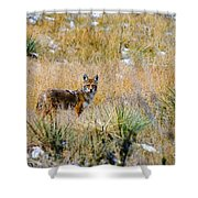 Coyotes Shower Curtain