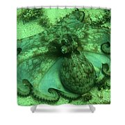 Cozumel Octopus Shower Curtain
