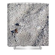 Crab And Footprint Shower Curtain