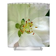 Crab Apple Blossom  Shower Curtain
