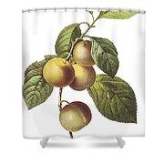 Crab Apple Shower Curtain