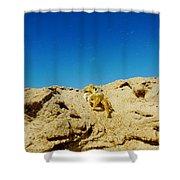 Crab Climb Blowing Sand 8/24 Shower Curtain