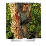 Crab Eating Macaque Shower Curtain by Ramona Johnston