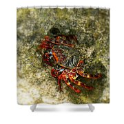 Crab In Cozumel Shower Curtain