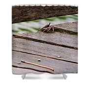 Crab On The Pier  Shower Curtain