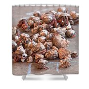 Crab Race Shower Curtain