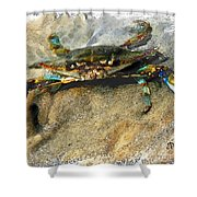 Crab Sketch Photo Shower Curtain