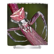 Crab Spider Hunting On Orchid Shower Curtain