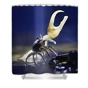 Crab Star Shower Curtain