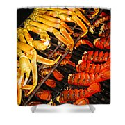 Crab Vs. Lobster Shower Curtain