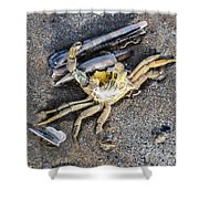 Crab With A Feather Shower Curtain