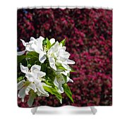 Crabapple Blooms 2 Shower Curtain
