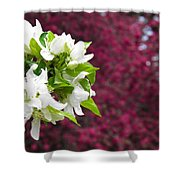 Crabapple Blooms Shower Curtain