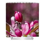 Crabapple Bud Shower Curtain