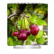 Crabapple Hill Shower Curtain