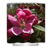 Crabapple Insect Shower Curtain