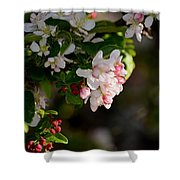 Crabapple Intricacies Shower Curtain