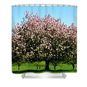 Crabapple Orchard Shower Curtain