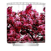 Crabapple Tree Blossoms Shower Curtain