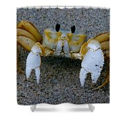 Crabby - Atlantic Ghost Crab Shower Curtain