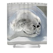 Crabeater Seal Shower Curtain