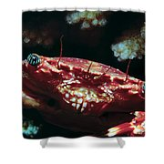 Crabs 1 Shower Curtain