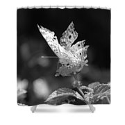 Cracked Wing Shower Curtain