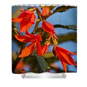 Crackling Fire Begonia Shower Curtain