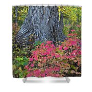 Cranberry Bush And Cottonwood Tree Shower Curtain