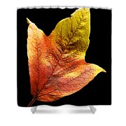 Cranberry Tree Leaf Isolated On White Shower Curtain