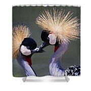 Crane 14 Shower Curtain