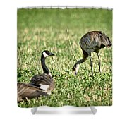 Crane And Friends Shower Curtain