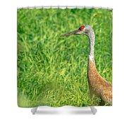 Crane Profile Shower Curtain