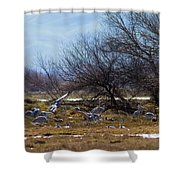 Cranes And Mixed Ducks Shower Curtain