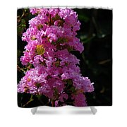 Crape Myrtle Shower Curtain