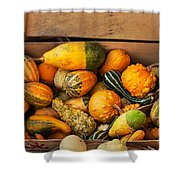 Crate Filled With Pumpkins And Gourts Shower Curtain