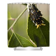 Crawling For Food Shower Curtain