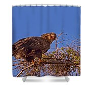 Crazy Eagle Shower Curtain