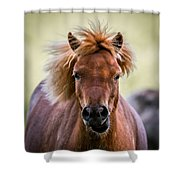 Crazy Mane Shower Curtain