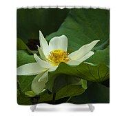 Cream Colored Lotus Shower Curtain