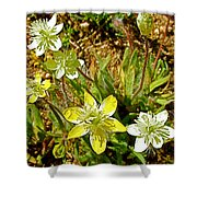Cream Cups In Antelope Valley California Poppy Reserve Near Lancaster-california  Shower Curtain